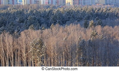 Forest and city on background
