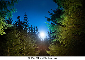 Forest and dark night sky