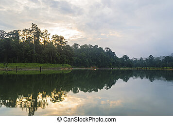 Forest  and death tree reflection with sunrise background