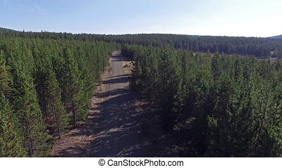 Forest and Dirt Road View - Aerial view of a dirt road and...