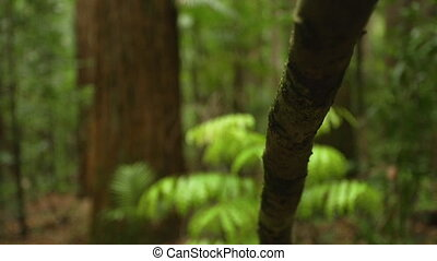 Forest and jungle branch - A moving shot forward of a tree's...