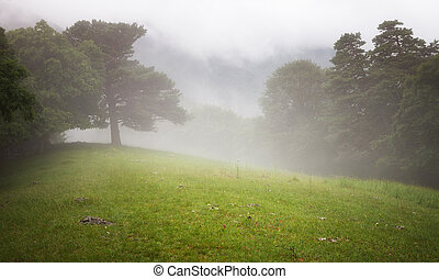 Trees in the forest and meadow in the mist