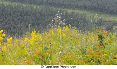 forest and meadow mountains and plains - mountain meadow and...