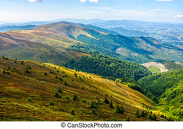 forest and meadow on a hill side - slope of mountain range...