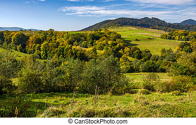 forest and meadow on hills in mountainous countryside -...