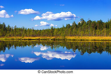 Forest And Sky Reflection