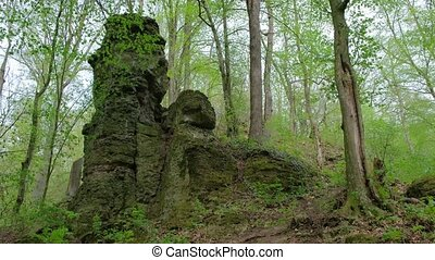 Forest and stone moss-covered rock. - Spring forest and ...