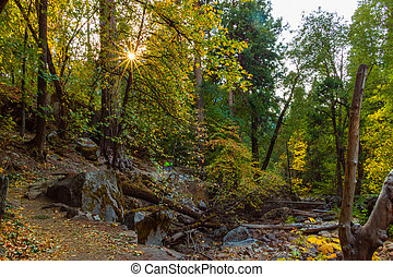 Forest and trees with fall colors in Yosemite