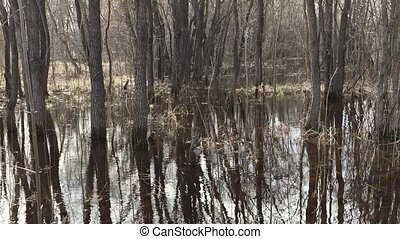 Forest and water spilling in the spring, tree trunks in...