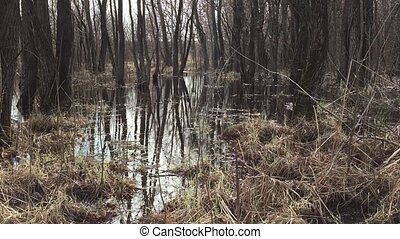 Forest and water spilling swamp in the spring, tree trunks...