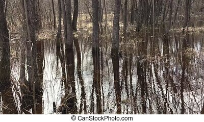 Forest and water swamp spilling in the spring, tree trunks...
