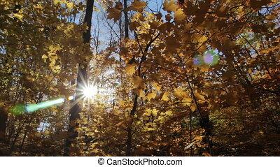 forest., angle., ensoleillé, bas, automne
