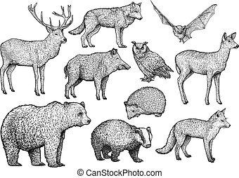 Forest animal illustration, drawing, engraving, ink, line art, vector