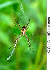 forest., araignés