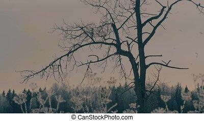 forest., arbre, vieux, marge, premier plan.