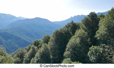 Forest around the Olympic Village. Russia, Sochi.
