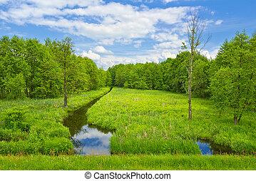 forest., arroyo, pradera