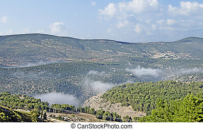 Forest at Israel