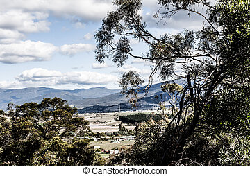 forest at Mt Field National Park, Tasmania