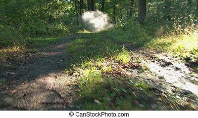 Forest at sunrise - steadicam shot