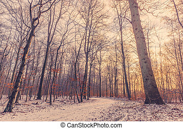 Forest at wintertime in the sunrise