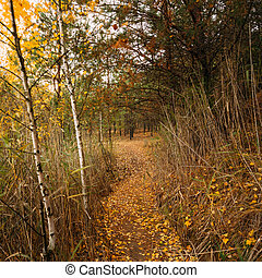 forest., automne, chemin, manière, sentier