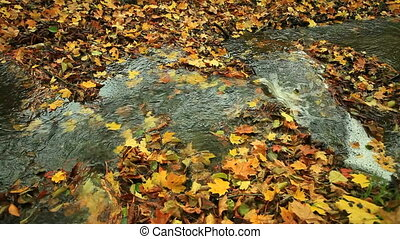 forest., automne, entiers, ruisseau, hd