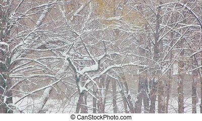 forest., automne, hiver, neige