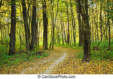 forest., automne, lumière soleil, paysage