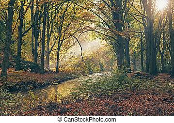 forest., automne, rayon, brumeux, lumière