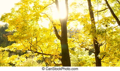 Magical forest trees park autumn time colorfull yellow nature wild