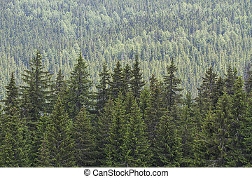 Forest background, summer time