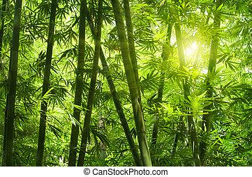 forest., bambu
