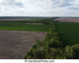 Forest belt along farm fields on a sunny day, aerial view. Agricultural landscape.