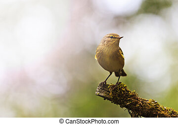 forest bird in the thickets of the sit