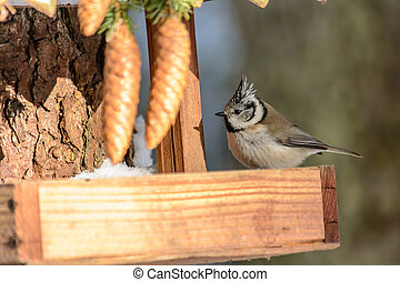 Forest birds live near the feeders in winter