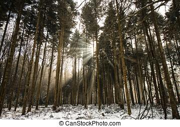 Forest, Bois de Savoie, Vaud, Switzerland
