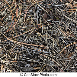 forest bottom background with pine needles