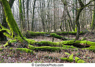 Forest bottom covered by moss