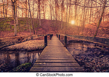 Forest bridge in the sunrise - Forest bridge with wooden...