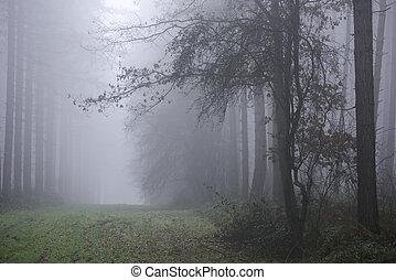 forest., brumeux, brumeux, hanté
