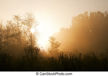 forest., brumoso, salida del sol