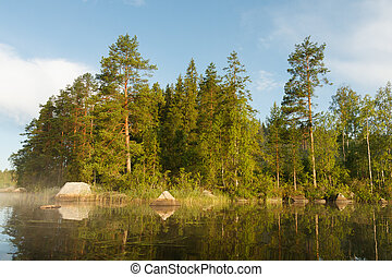 Forest by the lake at morning