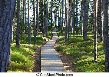 forest., caminho