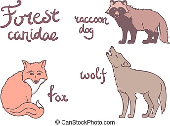 Forest canidae animals set.