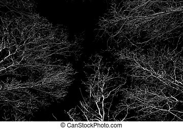 Forest canopy as seen from below in winter - Deciduous beech...
