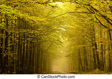 forest., centré, automne, route, mystérieux