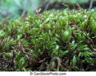 forest., cierre, turba, arriba, musgo, sphagnum, moss.