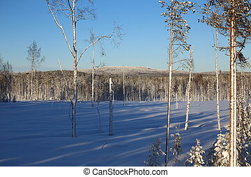 Forest clearing in Swedish winter in Vasterbotten.