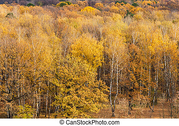 forest clearing on the edge of woods in autumn